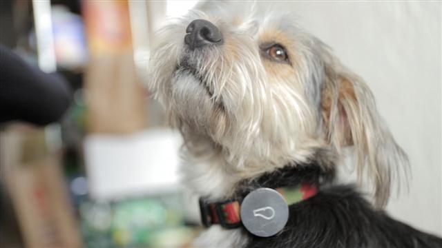A Wearable to Track Your Dog's Health