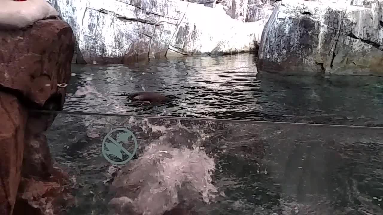Adorable Penguin Attempts to Escape