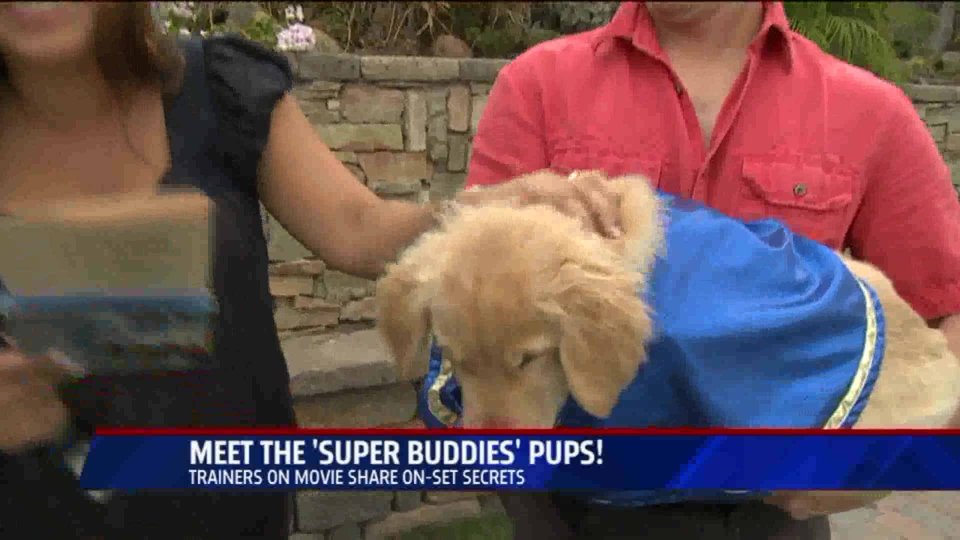 Meet The 'Super Buddies' Puppies!