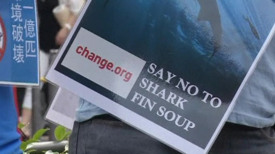 Group Gathers Against Shark Fin Soup