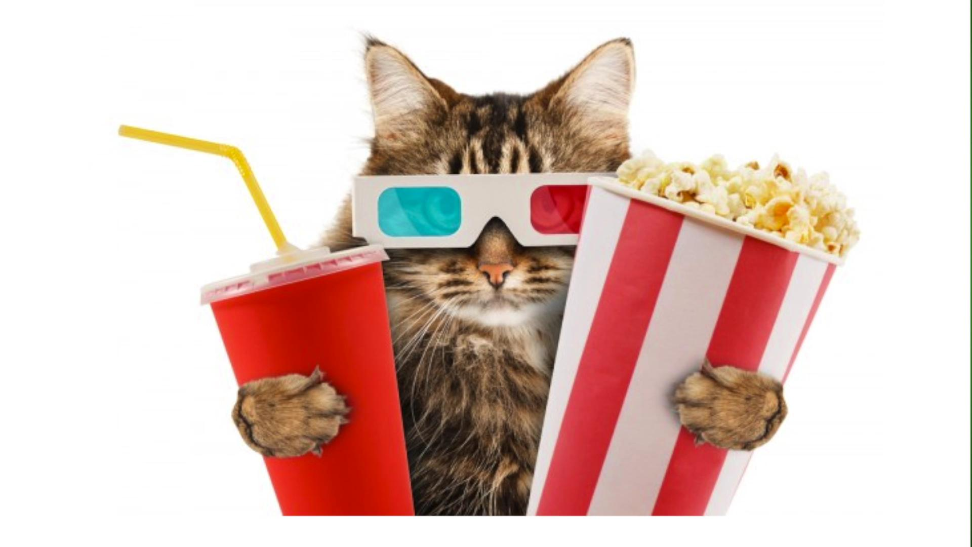 London Could Be Getting the World's First 'Cat Cinema'