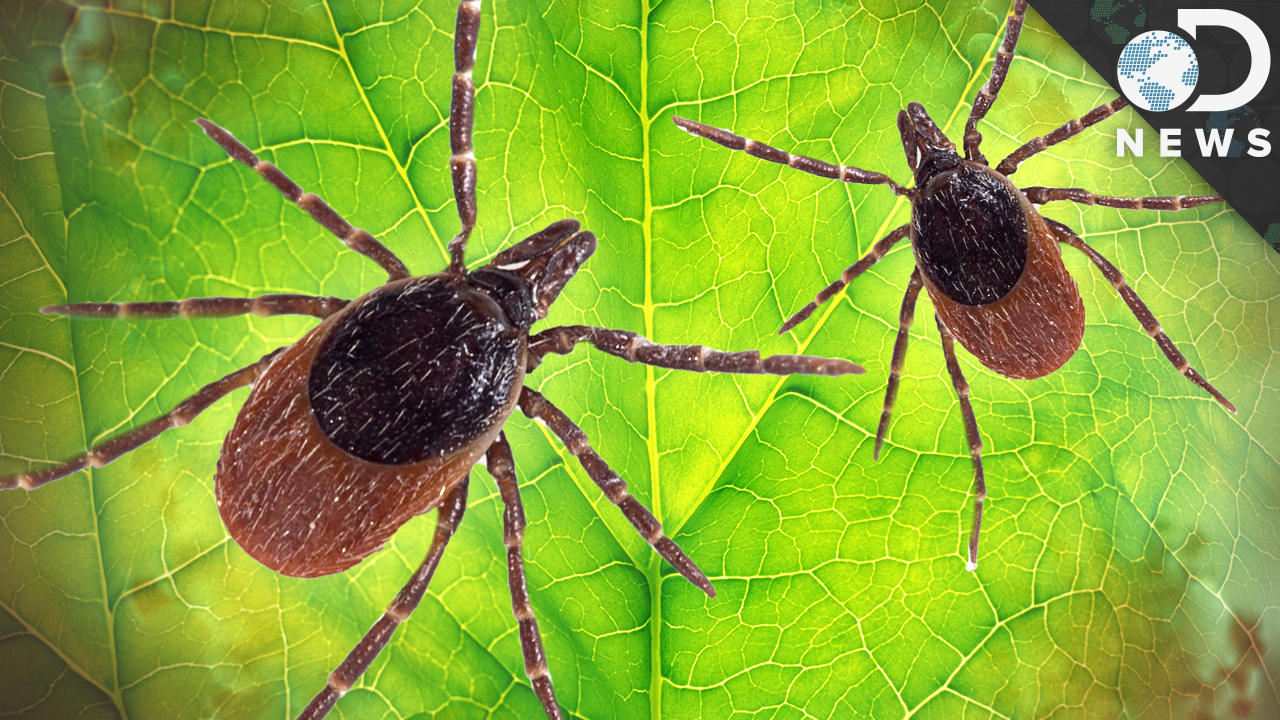 How Dangerous Is Lyme Disease?
