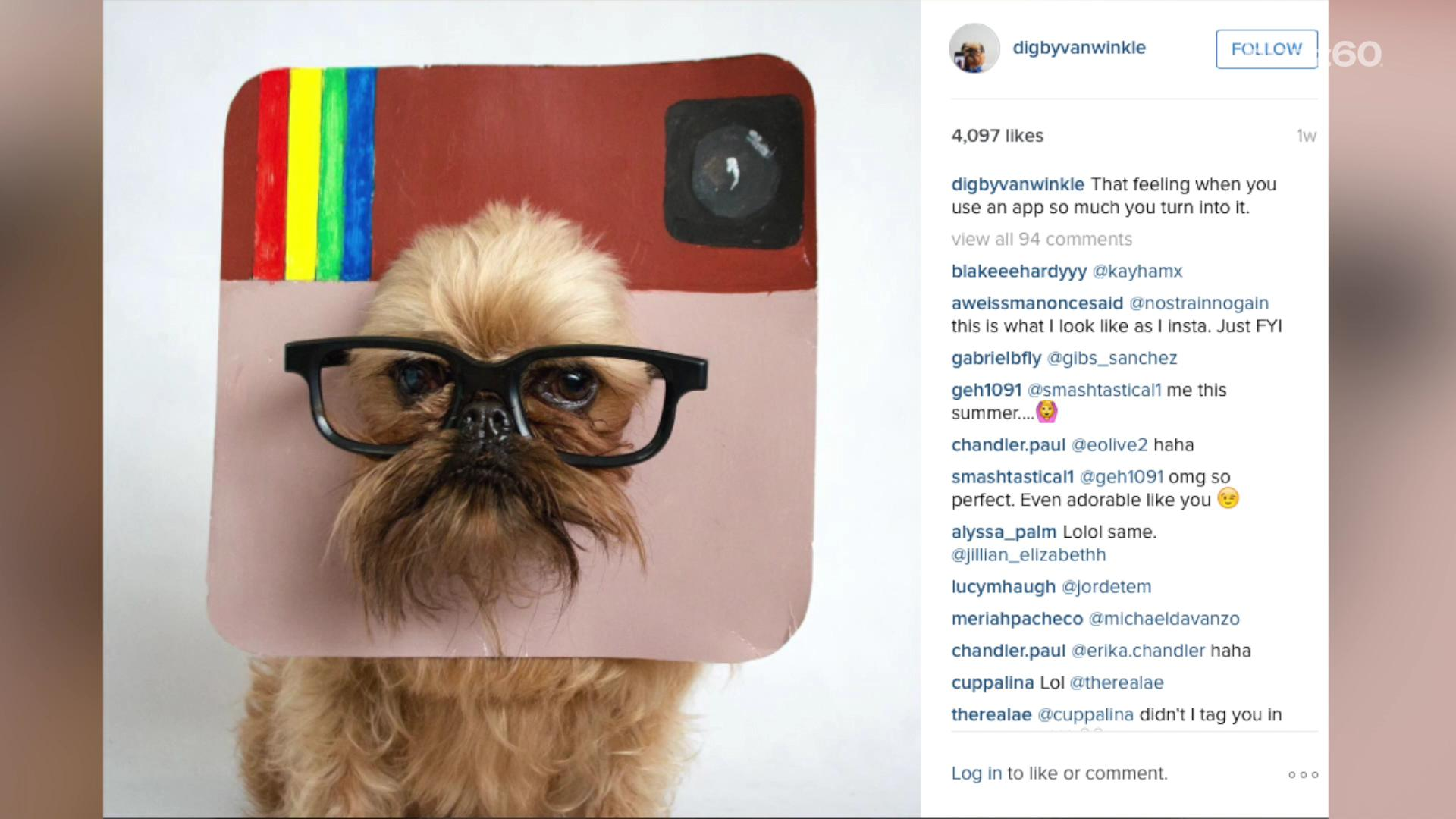 Best Dressed Dogs on Instagram