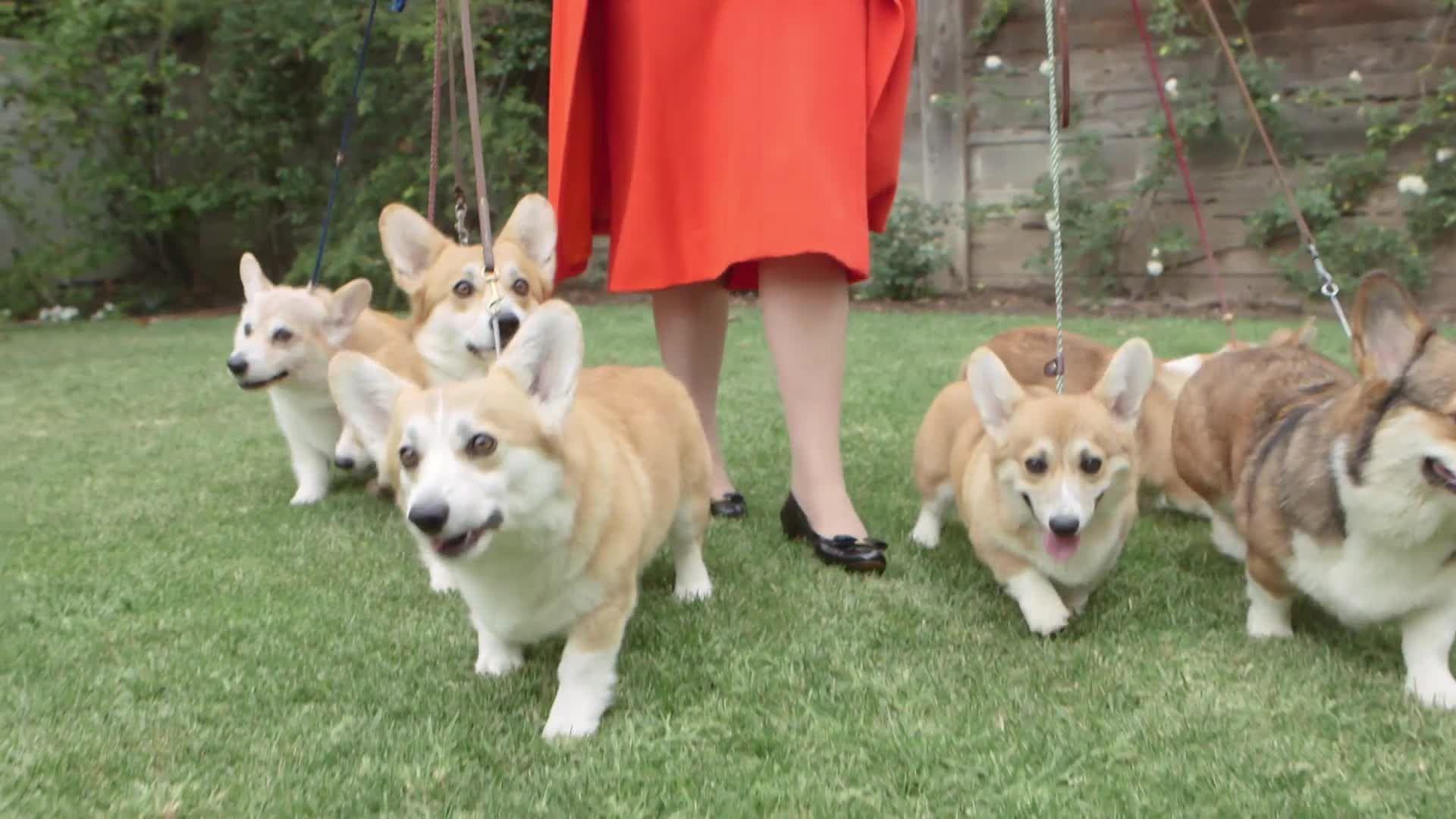Queen Elizabeth Corgi Dog Names