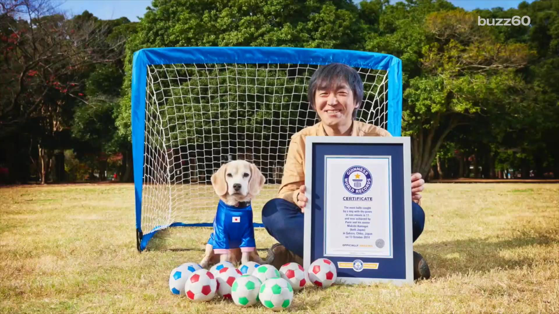 Amazing Dog Can Catch World-Record-Breaking Number of Balls
