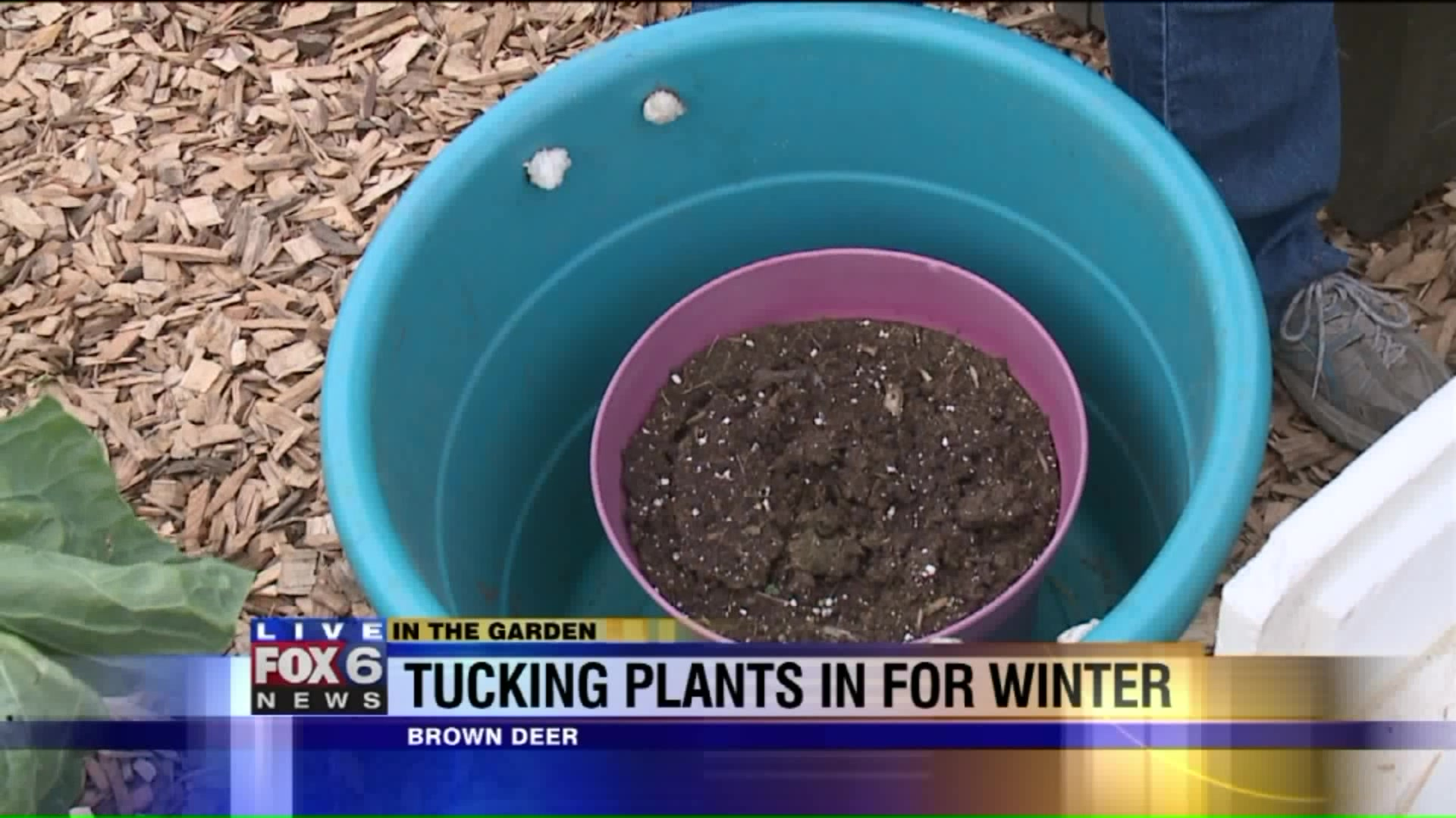 3 Ways To Keep Your Plants Alive Through The Winter