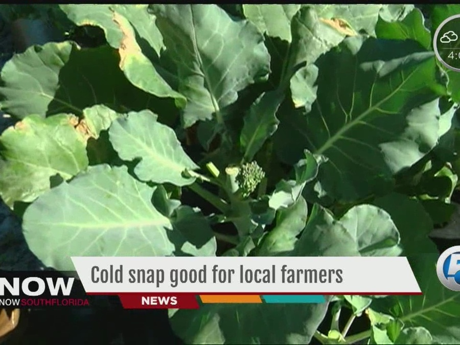 Cold Snap Good for Local Farmers