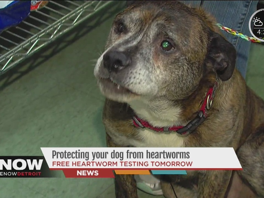 Detroit Dog Rescue Warns Pet Owners to Protect Against Deadly Heartworm Disease