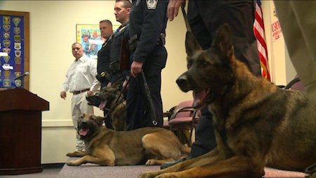 K-9 Officers Graduate After Months of Rigorous Training