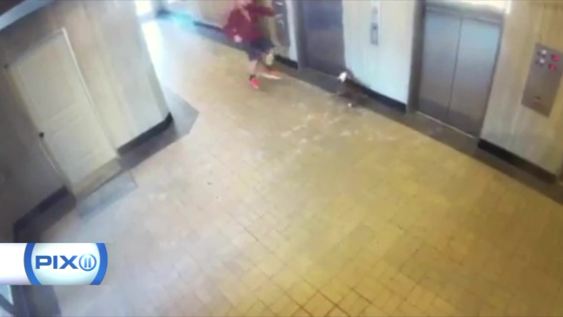 Hero Saves Dog After Terrifying Elevator Accident
