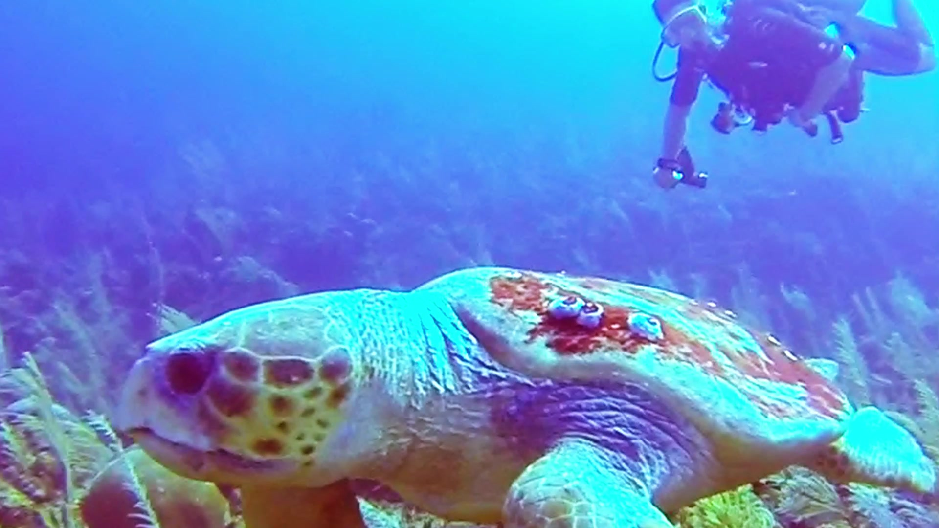 Massive Sea Turtle Wows Dive Master