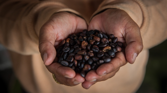 Does Drinking More Coffee Lower Your Risk of Liver Cirrhosis? Maybe.