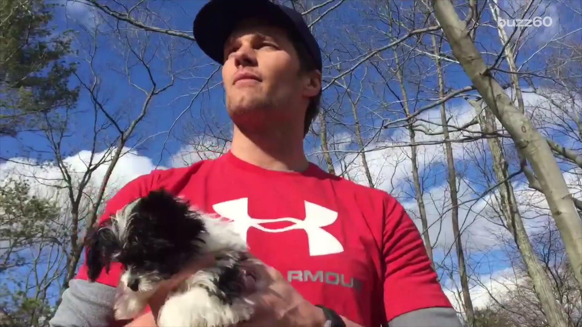 Tom Brady and His New Puppy Reenact 'The Lion King' Scene