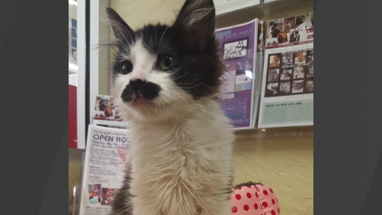 Rescued Kitten With Mustache Becomes Social Media Sensation