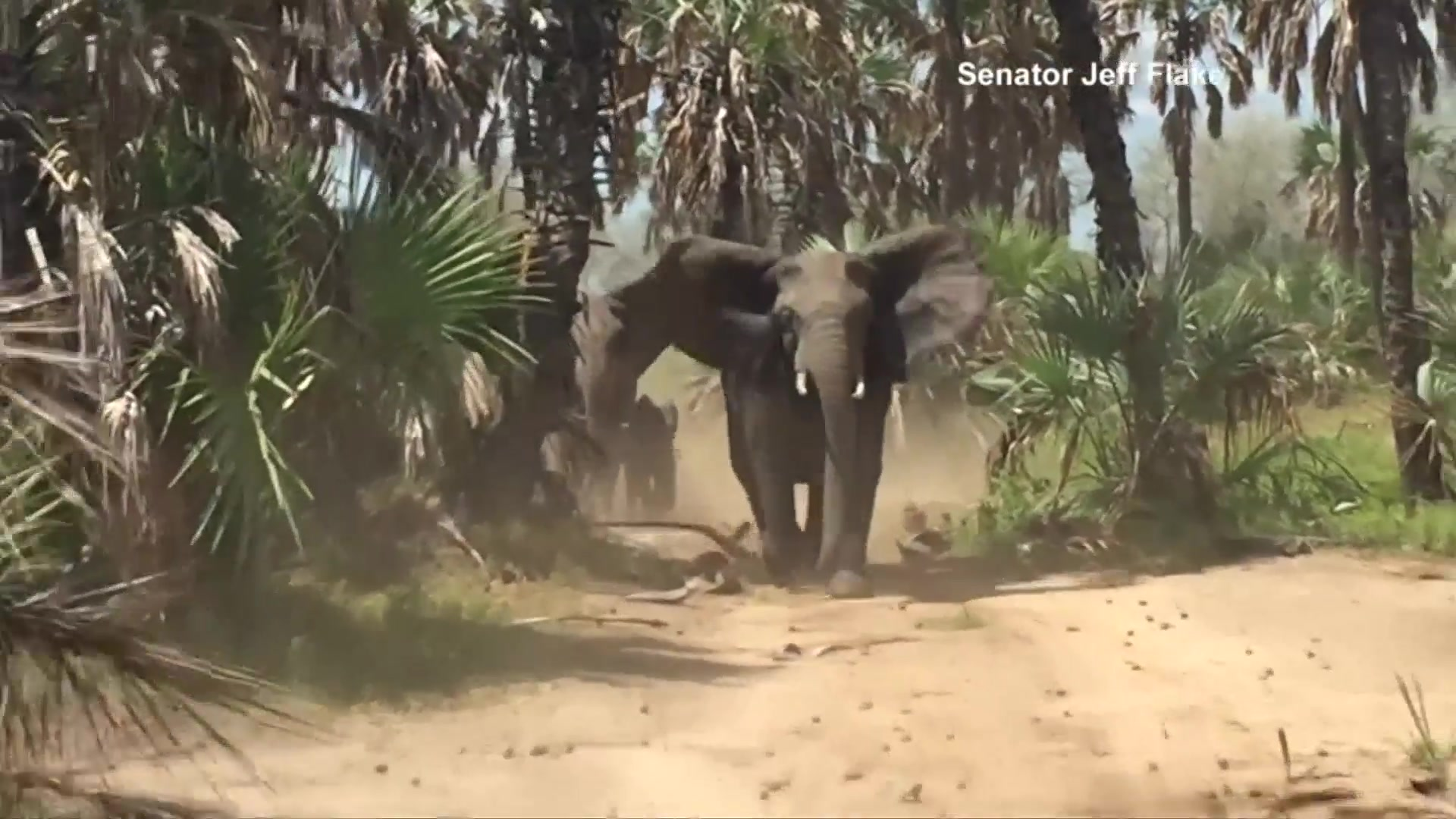 Elephants Chase U.S. Senator During Fact-Finding Trip