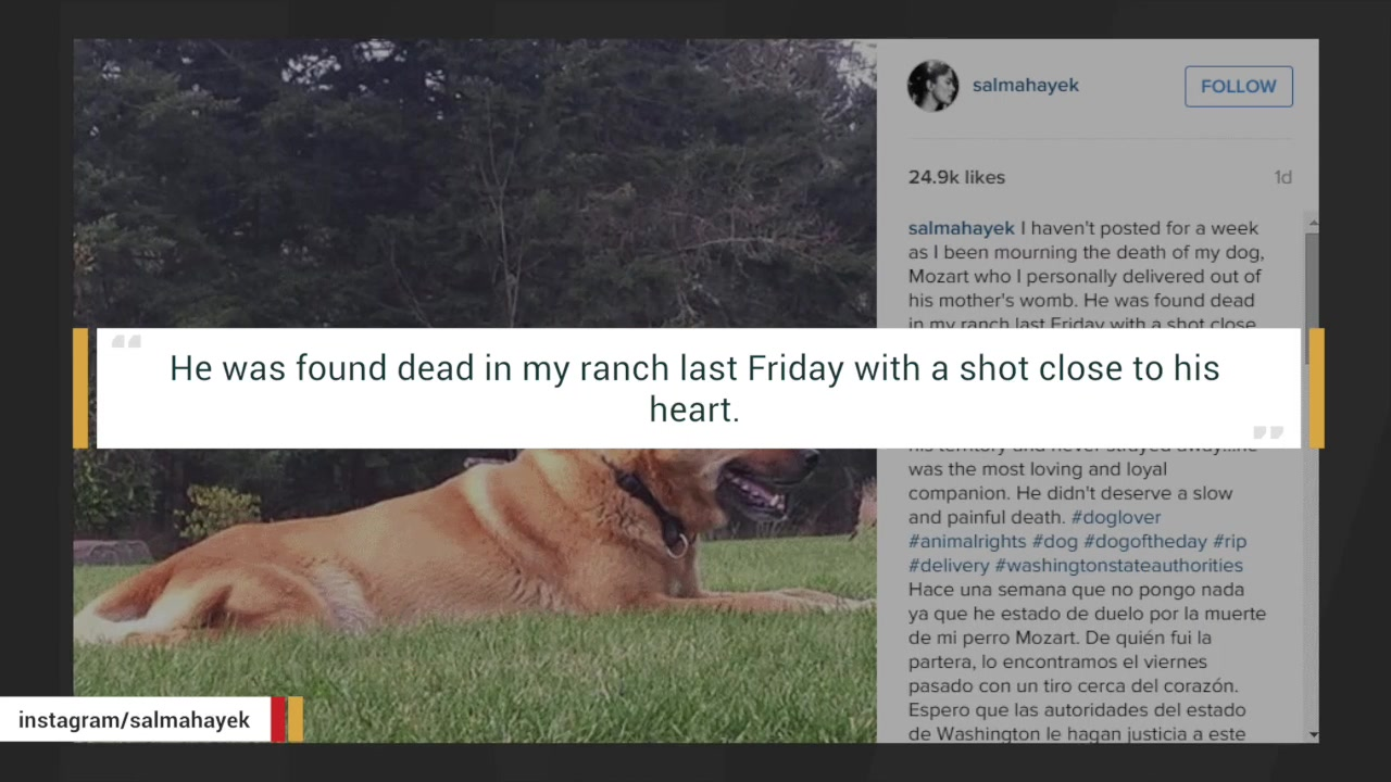 Salma Hayek Reveals Her Dog Was Found Shot To Death