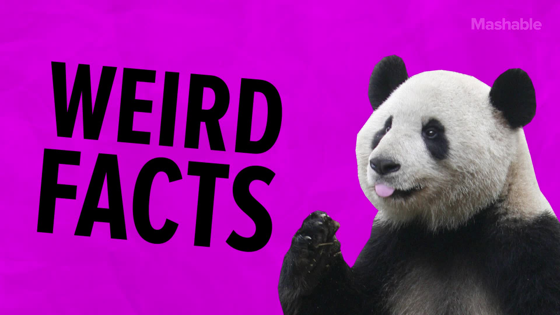 7 Weird Panda Facts Because They Truly Are the Greatest