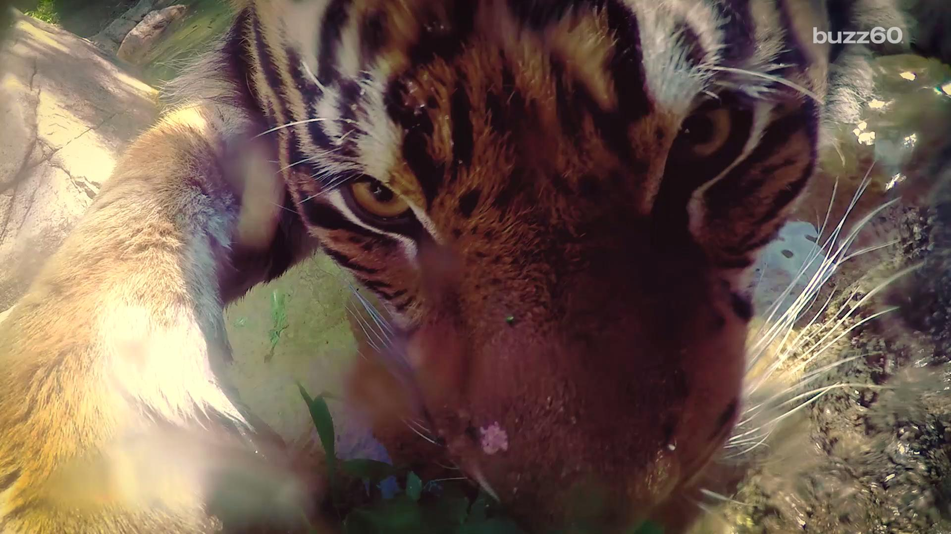 Google Sets Up Cameras for Animal Selfies at Los Angeles Zoo