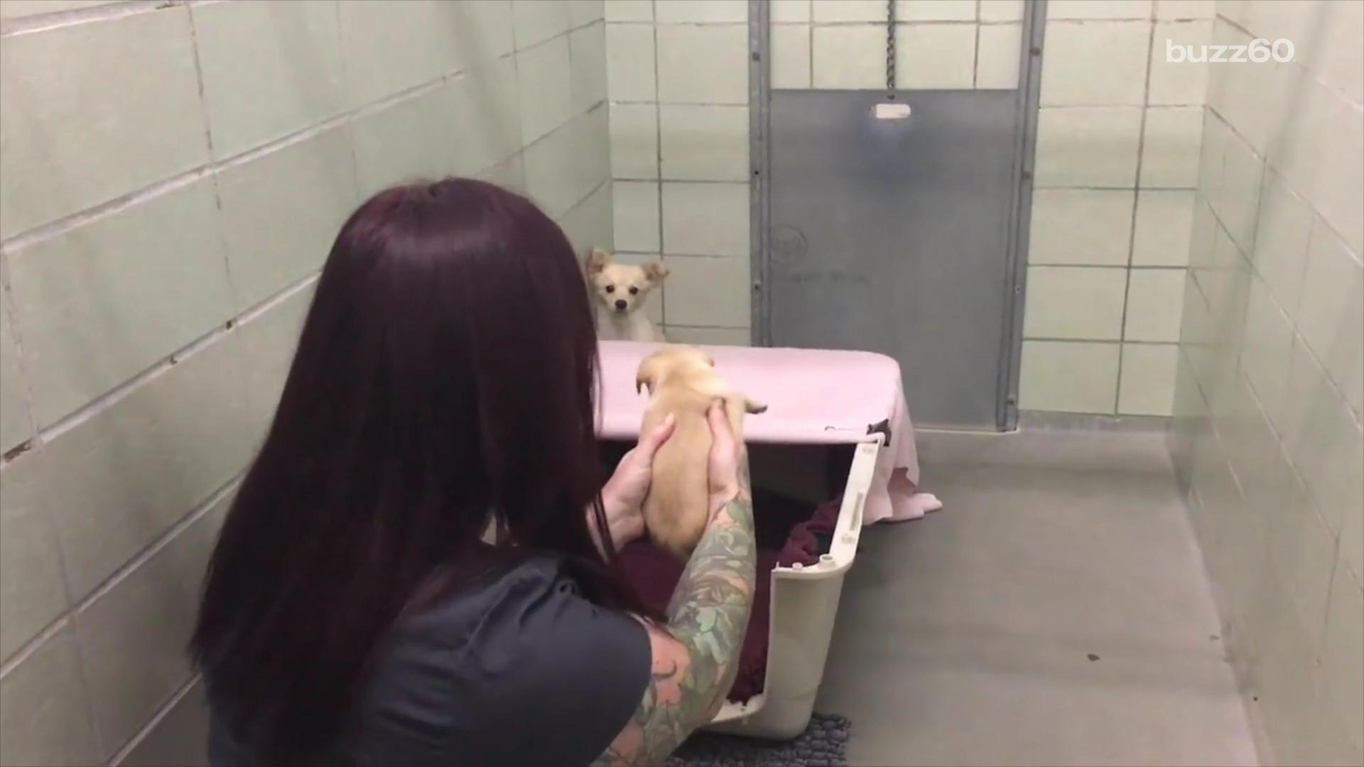The Moment a Shelter Dog Is Reunited with Her Puppies Will Make You Grab the Tissues