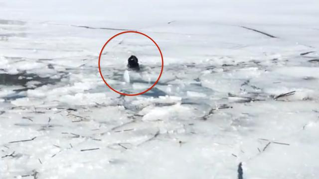 Rescuers Save Dog Stranded On Icy Reservoir For Five Days