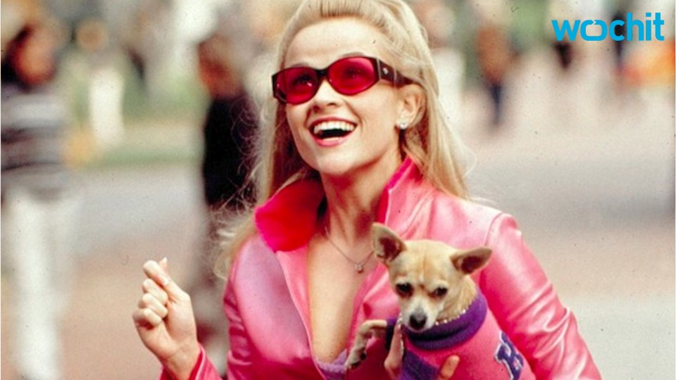 Moonie, The Chihuahua From 'Legally Blonde,' Has Died