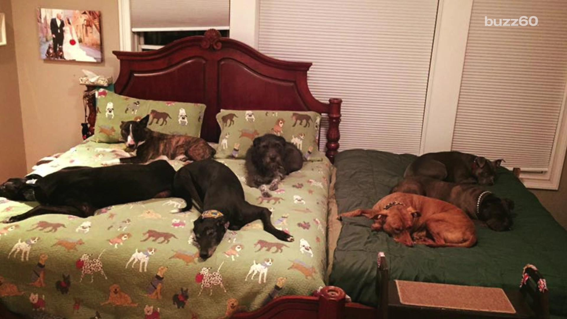 Couple Needs a Second Bed for All Their Adopted Dogs