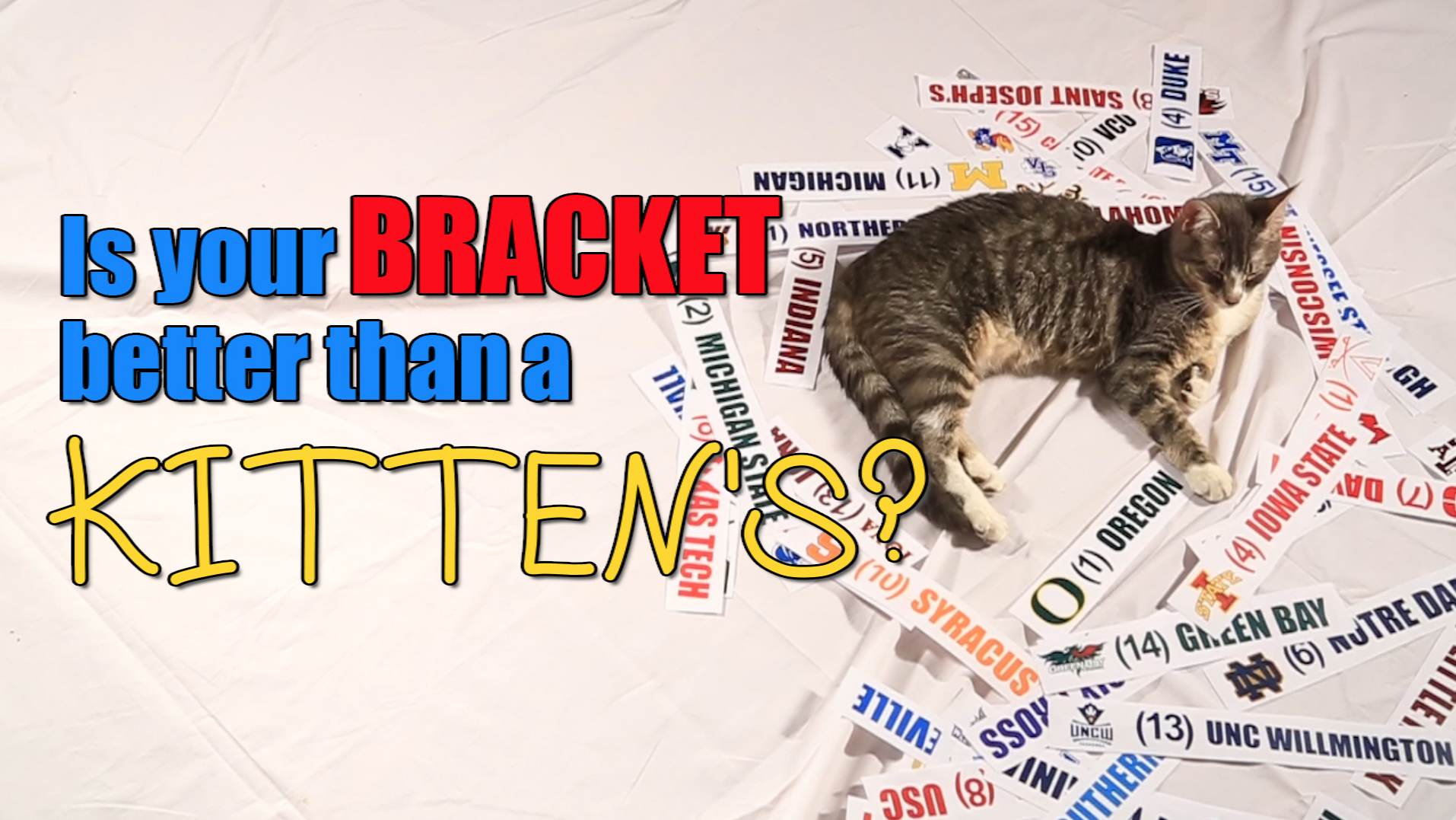 Mustard Minute: Is Your NCAA Tournament Bracket Better Than a Kitten's