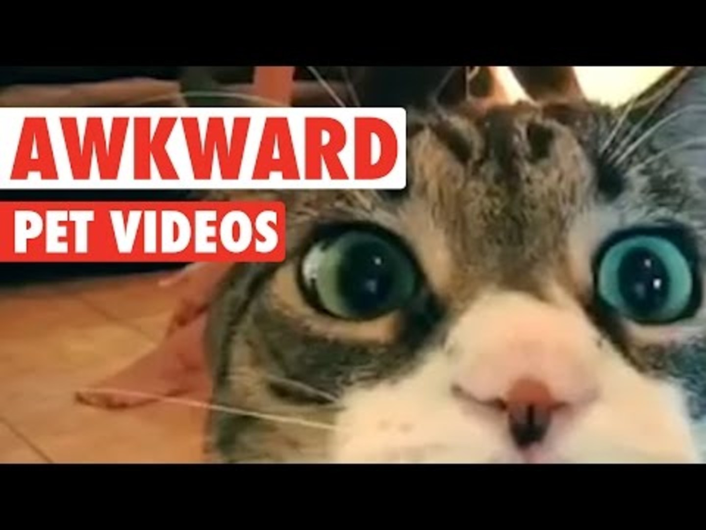 Awkward Pet Videos || Funny Pet Compilation