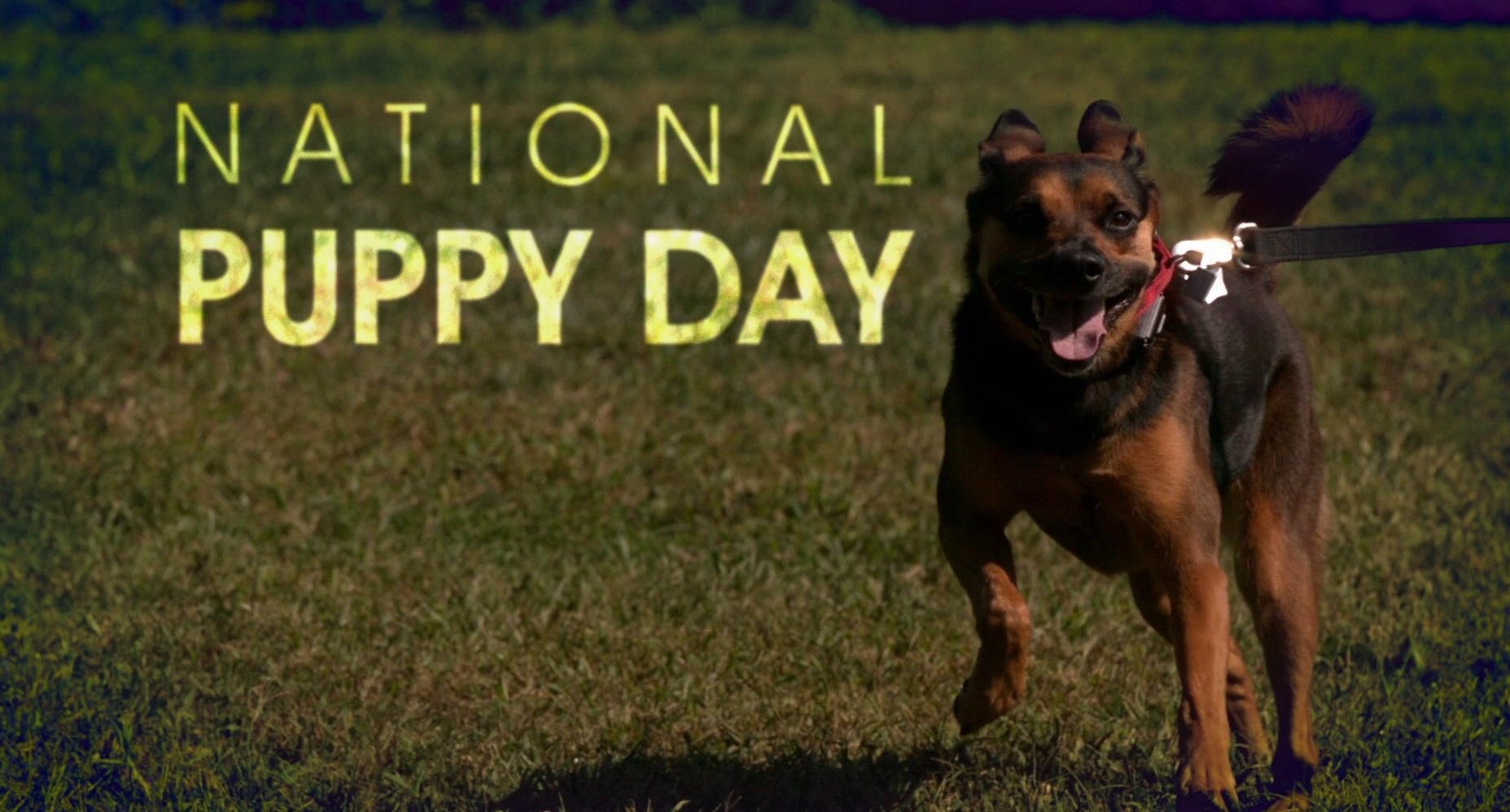 It's National Puppy Day! What You Need To Know Before Adopting A Dog