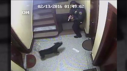 Surveillance Video Shows NYPD Cop Shooting Family's Dog