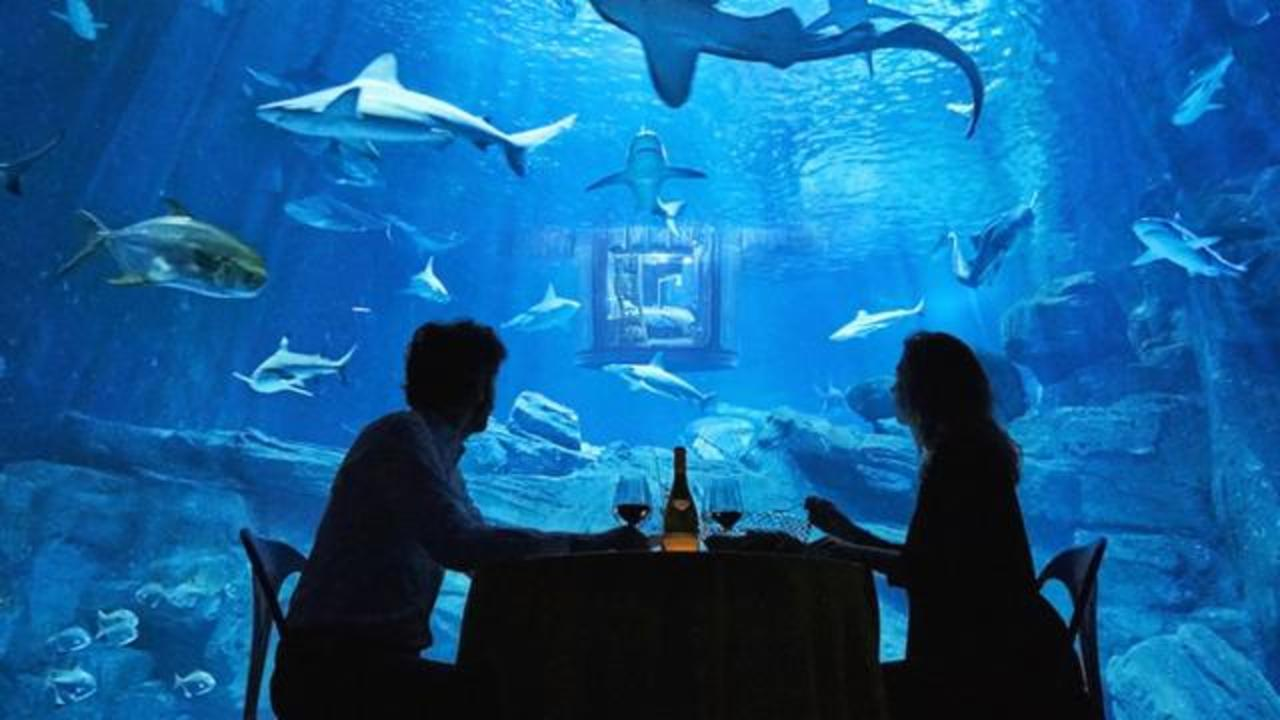 Airbnb Offers A Chance For You To Stay In Shark Tank