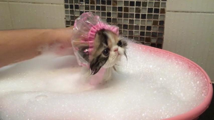 morning the kitten takes a bubble bath video aol uk