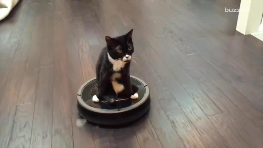 This two-legged kitten riding around on a Roomba is winning the internet