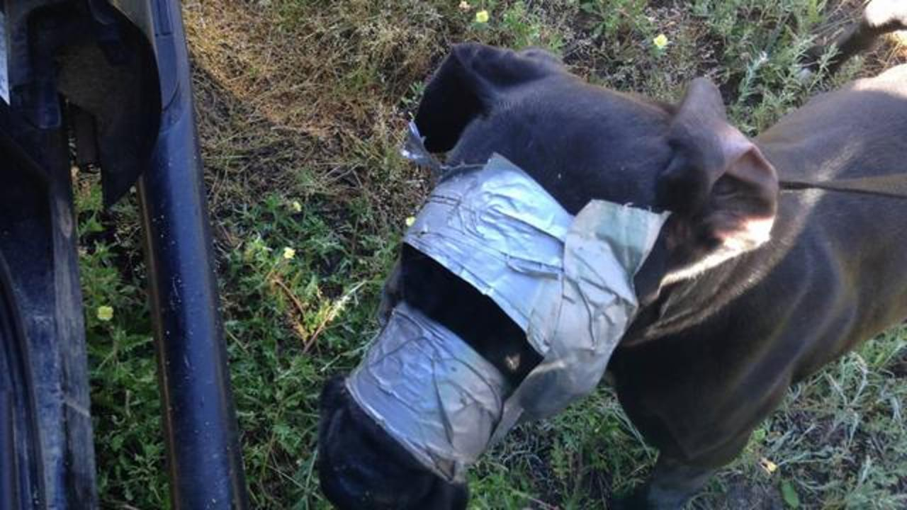 Authorities Post Heartbreaking Images Of Dog With Duct Taped Mouth