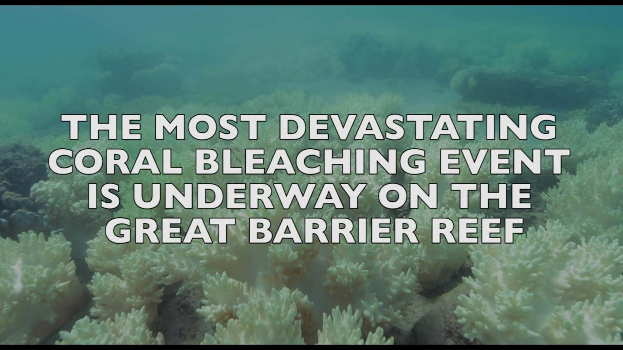 Most Devastating Coral Bleaching Event Underway On The Great Barrier Reef