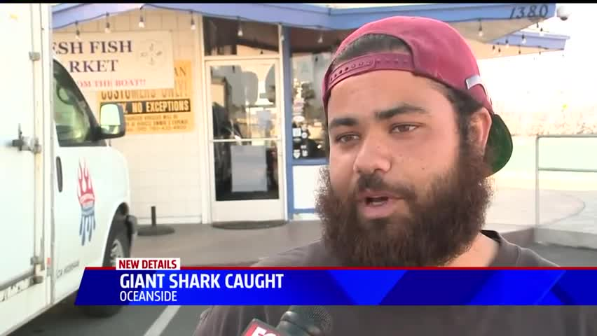 Fisherman Catches 550-Pound Shark Off California Coast