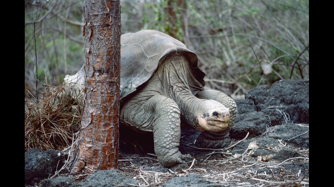 10 animals that have gone extinct in the last century aol