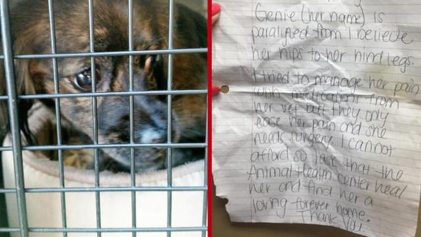 Owner Of Paralyzed Dog Leaves Her At Shelter's Doorstep With Sad Note
