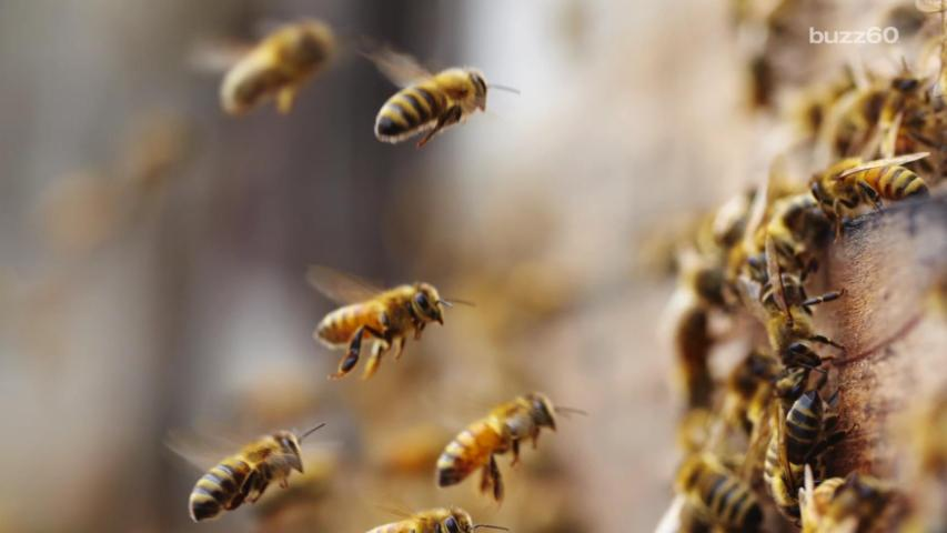 250,000 Bees Welcome to Stay at San Francisco Hotels