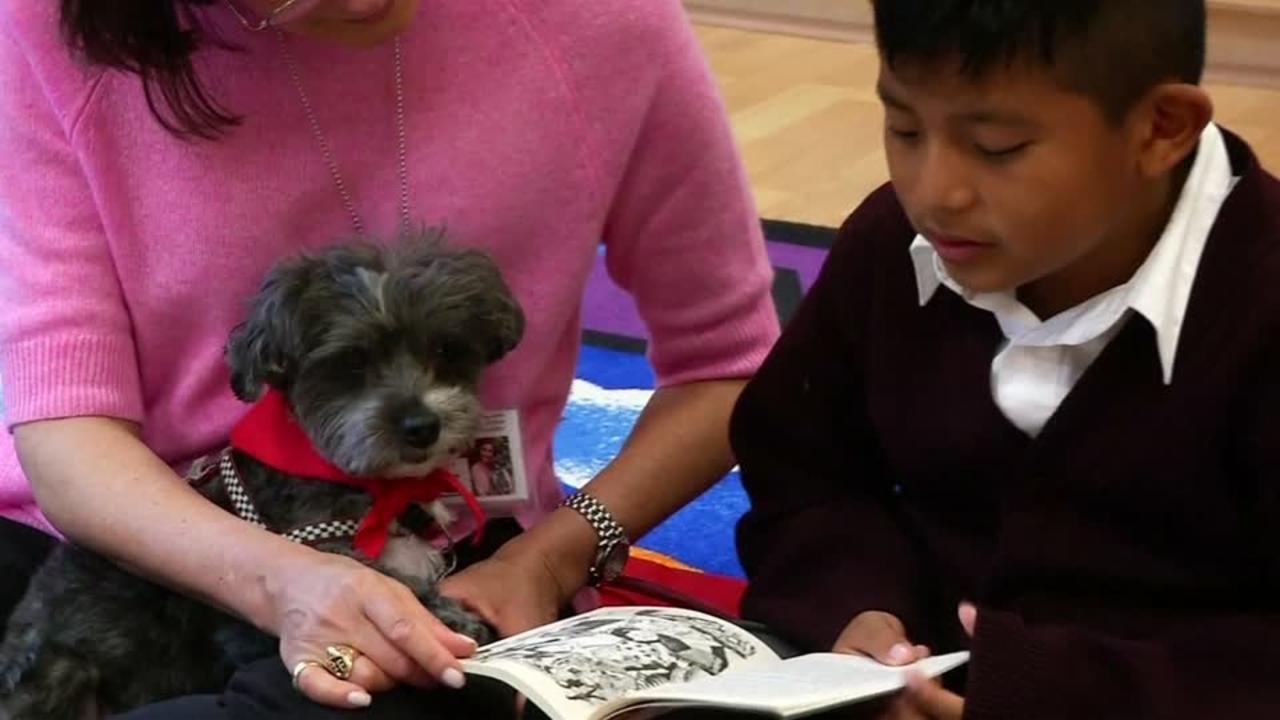 Therapy dogs help New York immigrant kids clear reading hurdles