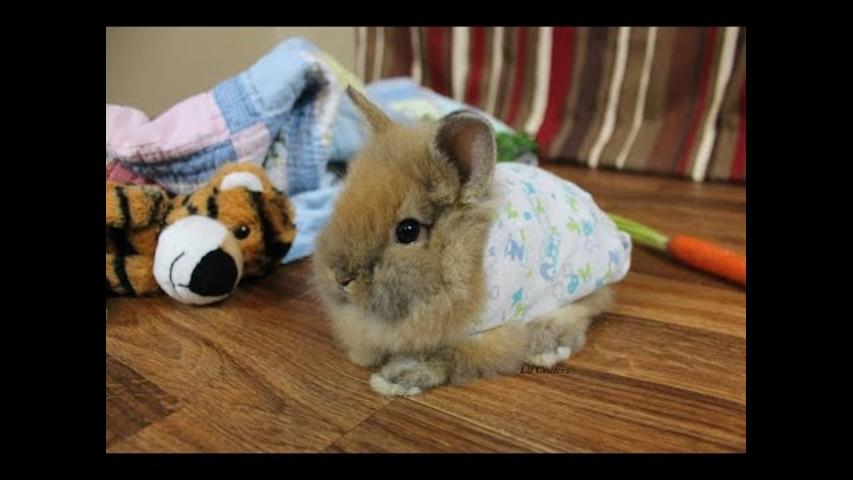 Bunny in Pajamas Is the Cutest Thing You'll See Today