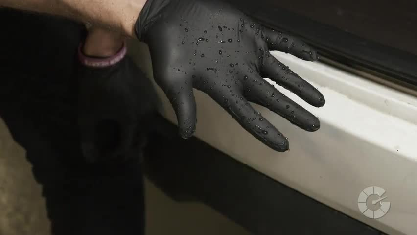 How To Remove Dog Hair From Car Interiors | Autoblog Details