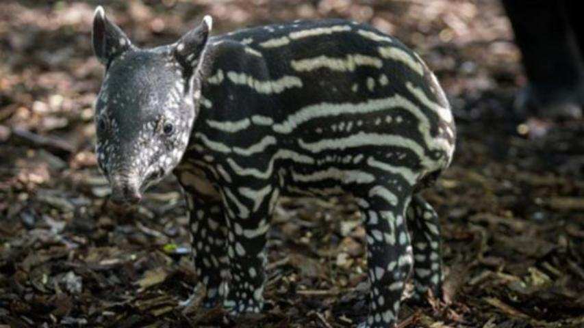 One Of The World's Strangest And Most Adorable Animals Learns To Walk