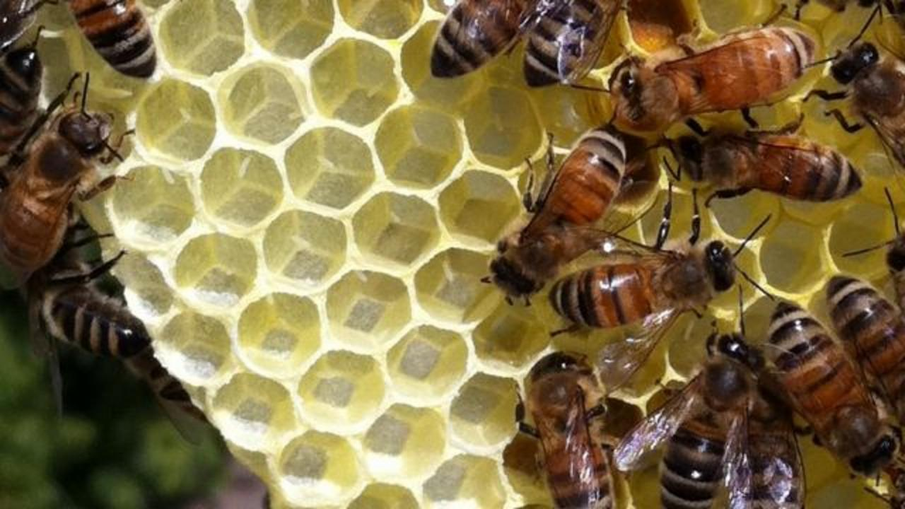 A Swarm of Bees Kills a Hiker in Arizona