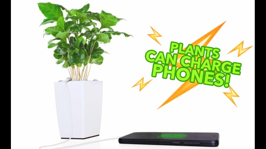 Plants Can Charge Your Phone