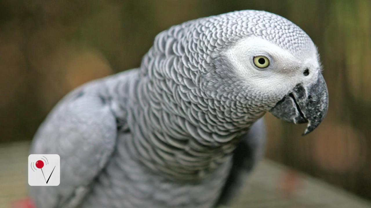 Parrot Could Be Key Witness In Owner's Bizarre Murder