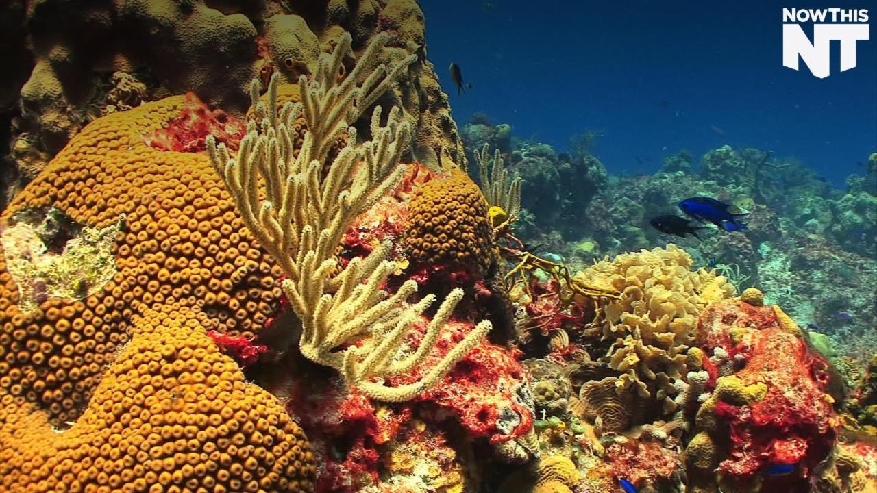 NASA Wants To Save The Coral Reefs