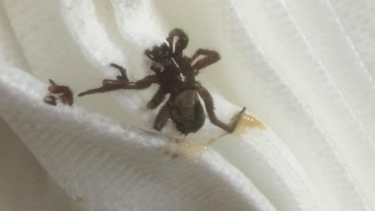 Woman Experiencing 'Gurgling Sensation' Finds Spider Living In Her Ear