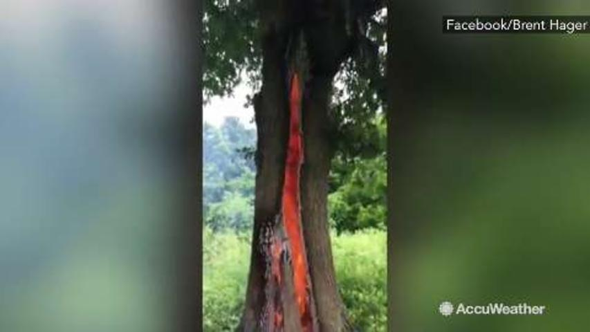 CRAZY: Tree burns from inside out after lightning strikes it