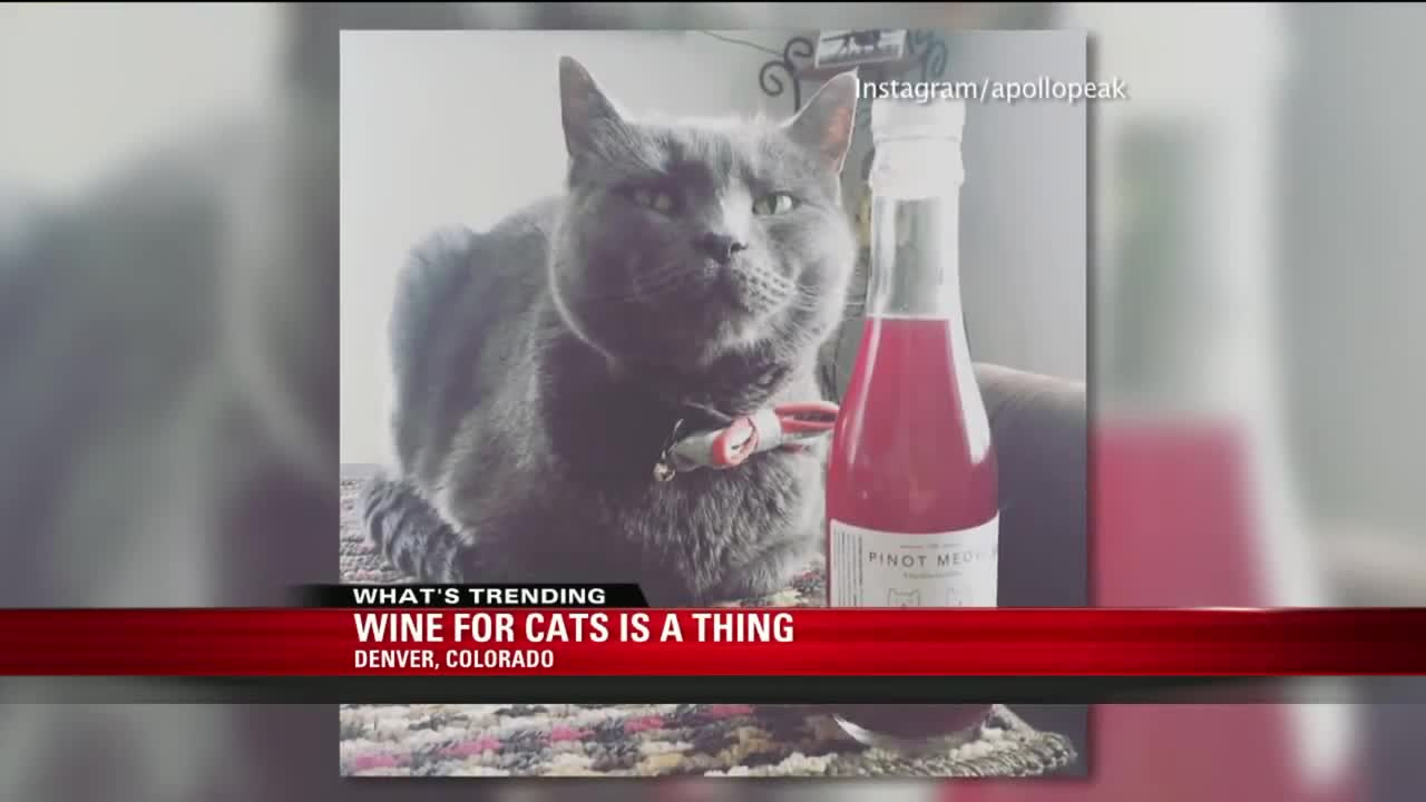 Wine for Cats is Now a Thing